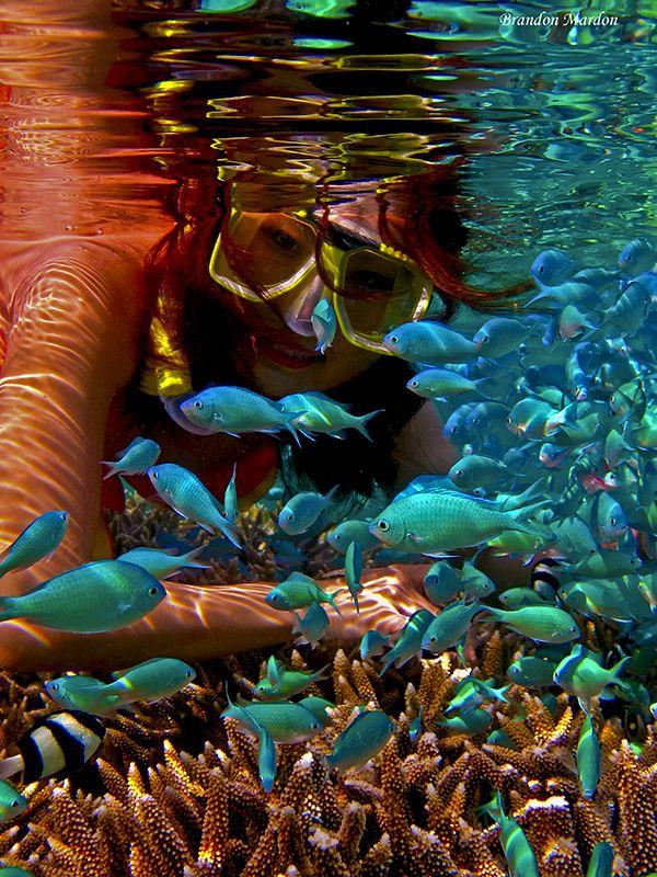 Fabulous snorkeling shot. Enlarge the image to really enjoy.