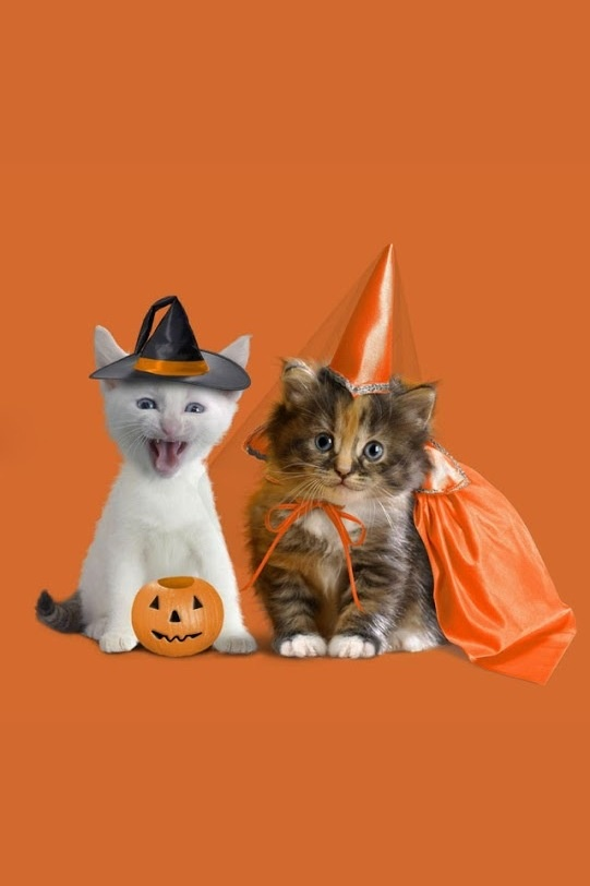 Cats Rule! two kittens in costumes Halloween iPhone wallpaper background holiday Halloween art - lock screen