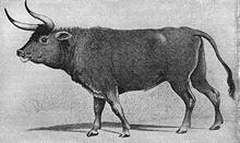 re'em or auroch