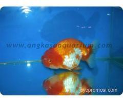Angkasa Aquarium #ayopromosi