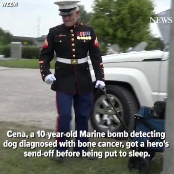 "ABC News on Twitter: ""Cena, a 10-year-old Marine bomb detecting dog, gets a hero's sendoff before being put to sleep due to cancer. https://t.co/FrYMYQmktN https://t.co/jDKETnztzX"""
