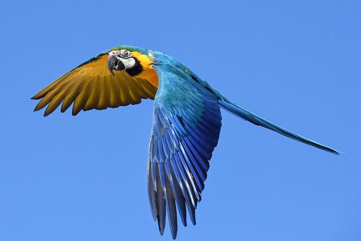 10 Fun Facts About Parrots How much do you know about parrots? These 10 fun facts at Pet Problems Solved should expand your knowledge of these gorgeous birds...