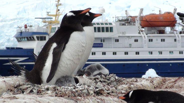 Antártica XXI / Chile. Una experiencia única!