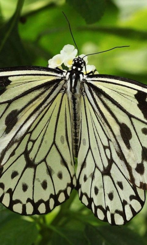 Download Wallpaper 480x800 Butterfly, Wings, Form, Light, Leaves, Insects HTC, Samsung Galaxy S2/2, Ace 480x800 HD Background