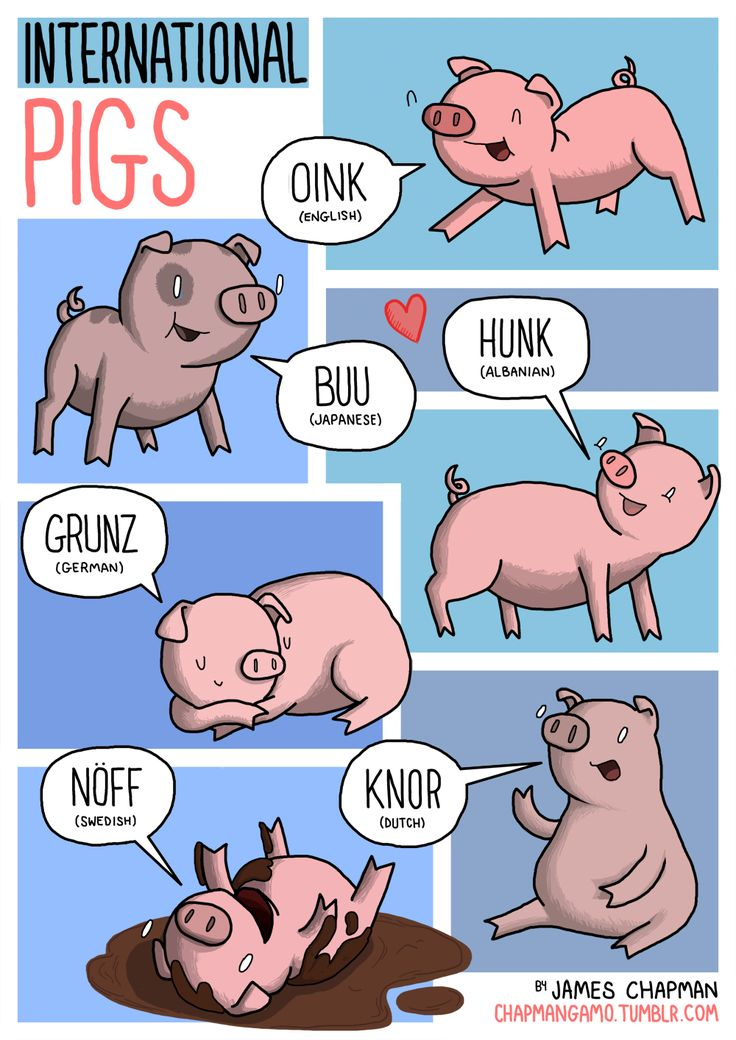 INTERNATIONAL PIGS Be careful next time you call some hunky hunk a hunk. They might speak Albanian and think you're calling th...
