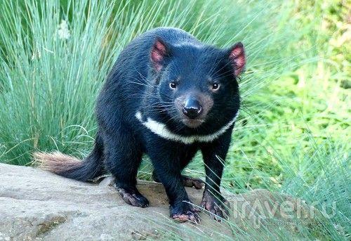 Австралия островная: Тасмания