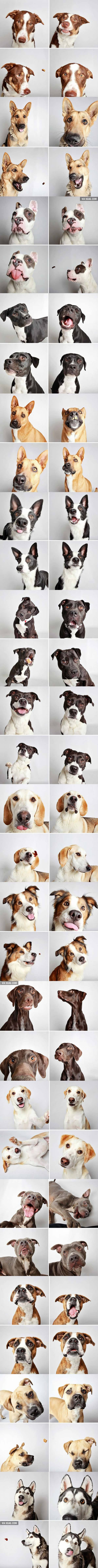 These Lovely Pictures Show That Dogs Love Photo-Booths As We Do!