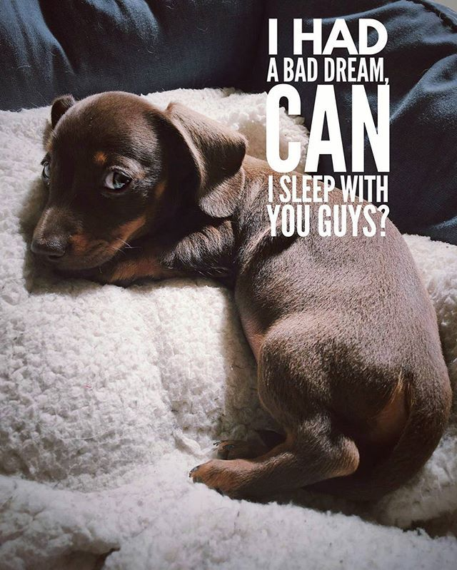 Sure you can  .  @jeffthesausagedog