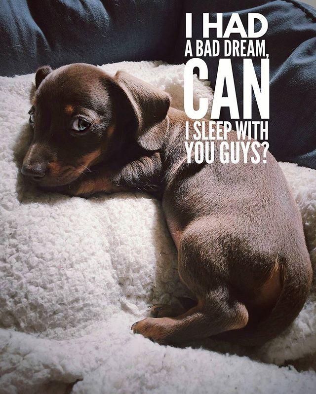 Sure you can  .  @jeffthesausagedog