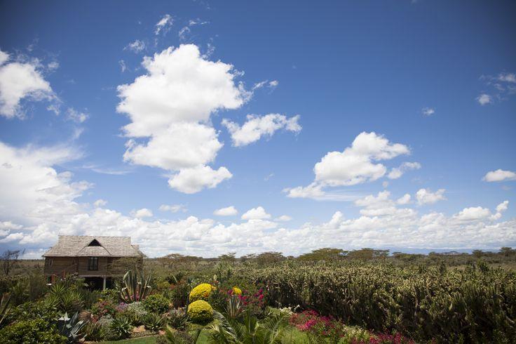 Garden. Sky.