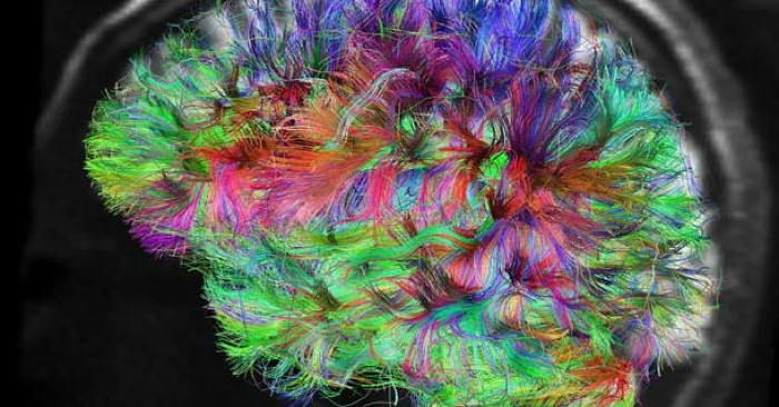 Feeding Our Teeming Brain - Many of us crave a mental diet loaded with information. How is that impacting the way we think, feel and interact with others?