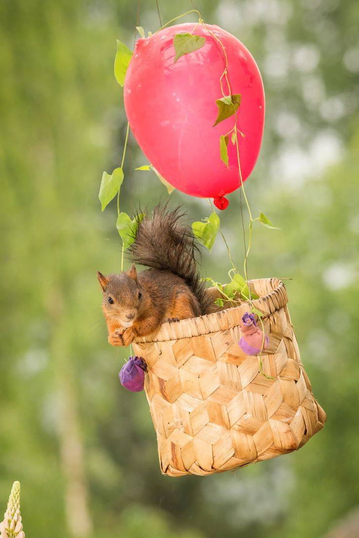 Best SQUIRREL Images On Pinterest Backyard Wildlife - Student befriends campus squirrels then dresses them in the cutest outfits ever