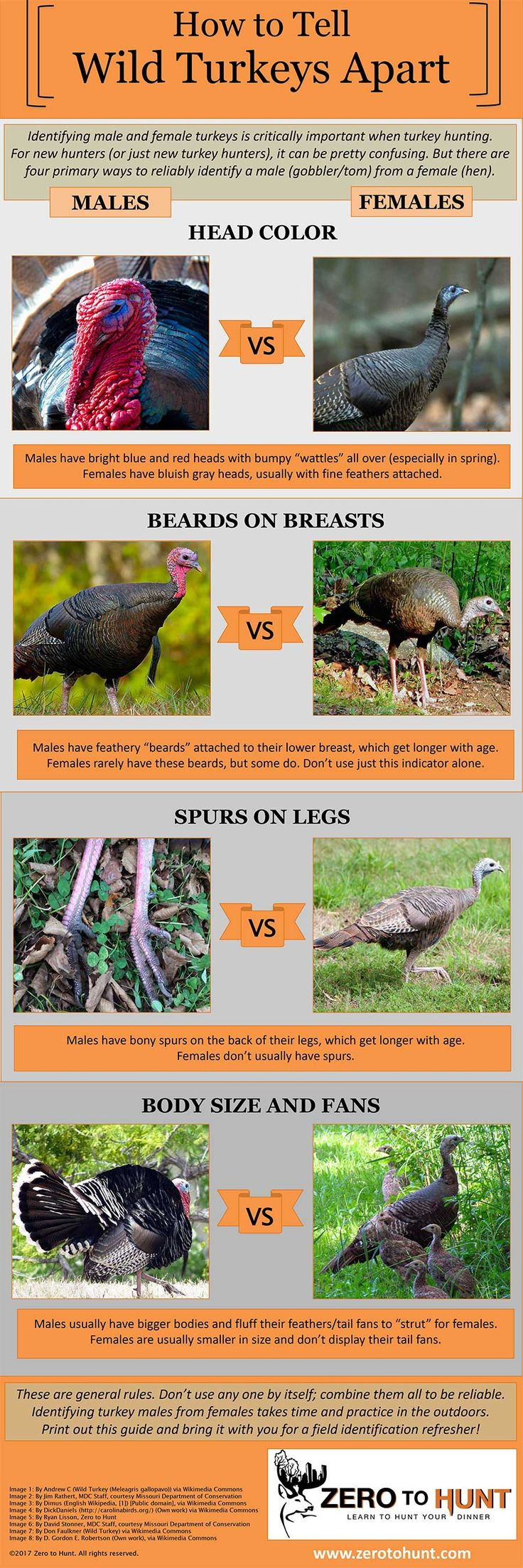 This Infographic Will Tell You if That Turkey is Indeed a Tom