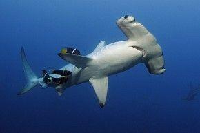 März '17:Tauchsafari und Naturkreuzfahrt Galapagos