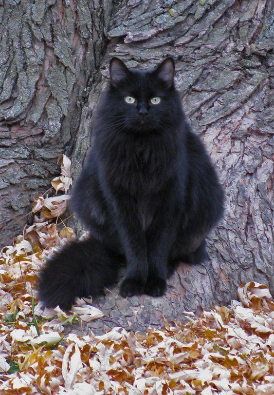Čierna Lesbické mačička šťava