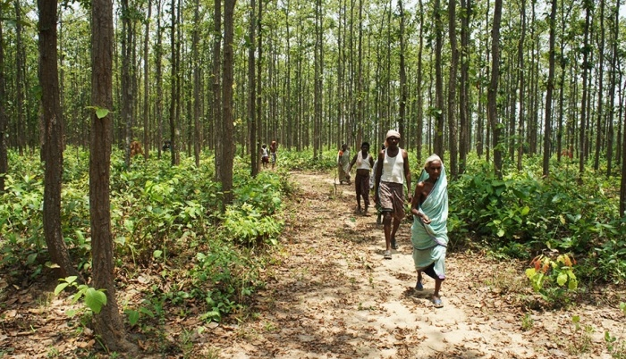 India to become next long-term growth market for forest products
