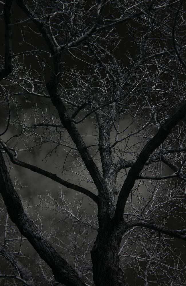 Trees Come Alive at #Night. www.frightkingdom.com