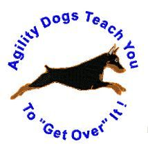 Agility dog teach you