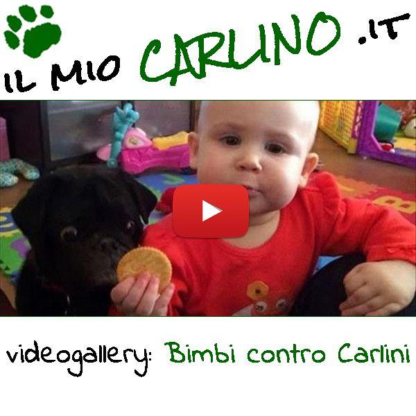 Meravigliosi filmati di Bambini e Carlini che si contendono biscotti! #carlino #cane #bimbo #bambini