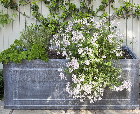 Lovely Tiny Courtyard Garden In Chiswick   In Pictures