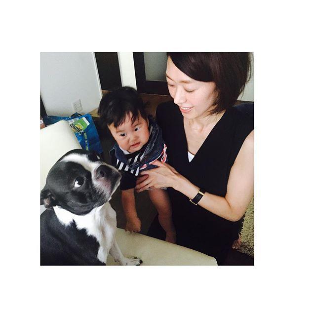 警戒するかんちゃんに、ナゼか余裕顔のnuts😆 #buhi#bostonterrier #bostonterrierlove #bostonterriers #bostonterriergram #bostagram#pet#dog#doglove#love#doglife#ボステリ#ボストンテリア #犬のいる暮らし#愛犬