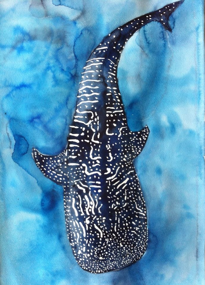 "SOLD!! ""Whale Shark"" - original watercolour, unframed 55cm x 37.5cm. Heading from Australia to its new home in Italy soon. Follow more of my marine art and science stories as Dr Suzie Starfish on Facebook."