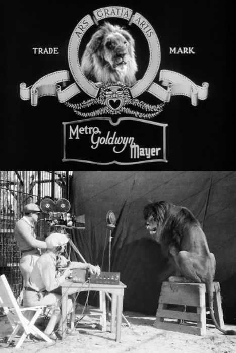Camera crew recording Jackie the Lion for MGM's roaring lion production logo (1929)