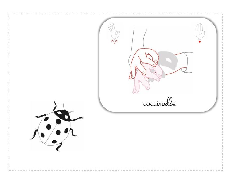 coccinelle LSF illustration