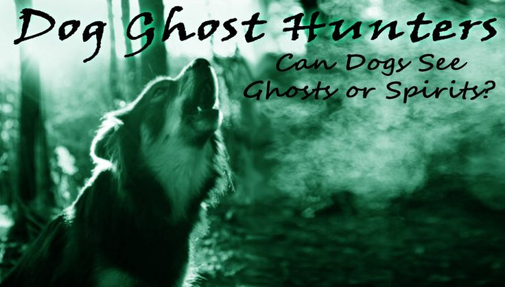 Dog Ghost Hunters || Can Dogs See Ghosts or Spirits?