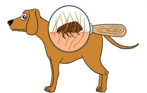 pulgas-e-carrapatos