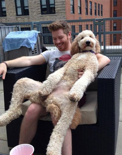 This is how my dog sits on my lap. (She thinks she's a person)