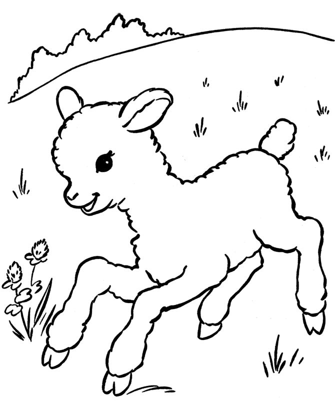 Farm Animal Coloring Page Free Printable Sheep Pages Featuring Little Lamb Running
