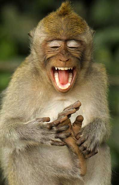 A macaque monkey appears to be laughing as it tickles its own feet in Ubud, Bali, Indonesia. - photo by Natalia Paklina