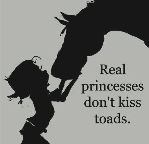 Funny Horse Quotes | horse quotes | Tumblr
