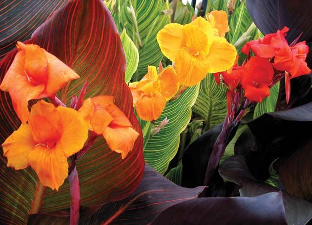 house plants with small leaves, tomato plants with purple leaves, house plants with light green leaves, house plant rubber plant, perennial plants with purple leaves, house plants with dark red leaves, house plants with bronze leaves, wandering jew with fuzzy leaves, florida plants with red leaves, house with red flowers, house plants with shiny leaves, poisonous plants with purple leaves, house plant purple heart, olive tree green leaves, house plants with long green leaves, house plants with colorful leaves, purple foliage plants with leaves, purple house plant fuzzy leaves, house plants with waxy red blooms, house plants and their names, on three house plants with purple leaves