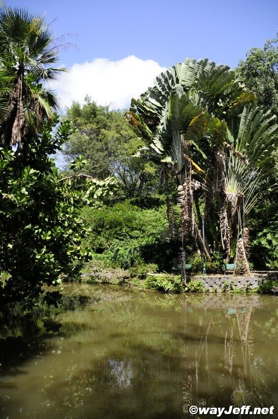 17 best images about puerto rico on pinterest islands for Jardin 17 rio gallegos