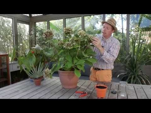 1000 id es sur le th me peinture d 39 hortensia sur pinterest for Youtube entretien jardin