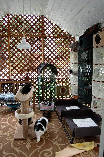 My attic for my cats