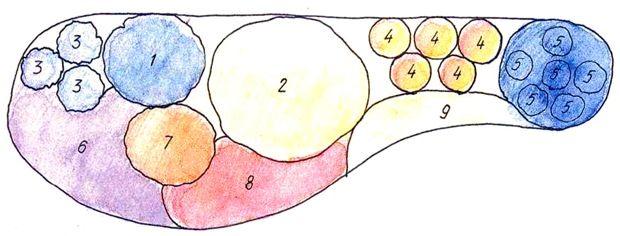 1. Мордовник 2. Гипсофила метельчатая 3. Вероника колосковая 4. Гайлардия 5. Синеголовник 6. Колокольчик карпатский 7. Очиток видный 8. Армерия морская 9. Ясколка Биберштейна