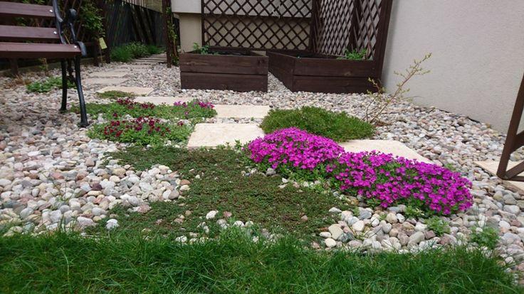 Żagwin ogrodowy i płomyk kwitną już w kwietniu