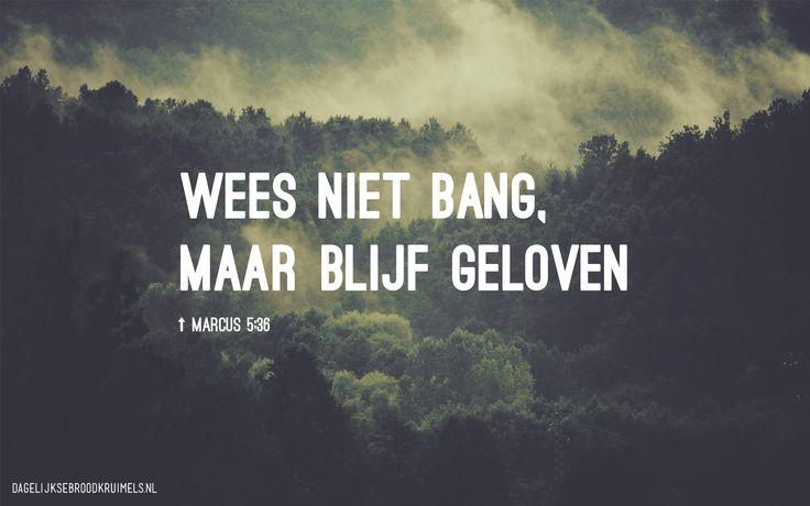 Wees niet bang, maar blijf geloven. Markus 5:36  #Angst, #Geloof  http://www.dagelijksebroodkruimels.nl/markus-5-36/