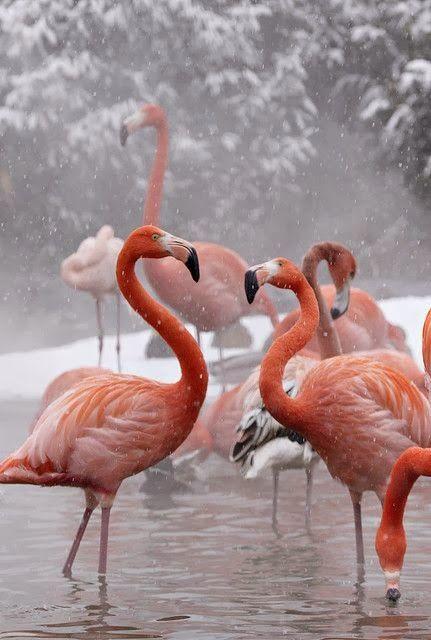 New Wonderful Photos: Flamingos