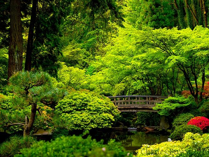 Buddhist Ceremony Traditional Japanese Garden: 17 Best Images About Japanese Gardens On Pinterest