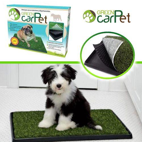 GreenCarPet® es un contenedor sanitario para mascotas, ideal para las personas que habitan en departamentos o que no cuentan con el espacio suficiente para las necesidades de sus mascotas.  Con GreenCarPet® ahorrarás tiempo y esfuerzo por ser un producto fácil de limpiar y lavar, evitando accidentes con tu mascota en cualquier parte del hogar.   Mediano 50.8 x 63.5 cm - $499 Grande 50.8 x 76.2 cm - $599  De venta en Para Perros :)
