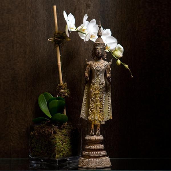 asian garden buddha palm raised