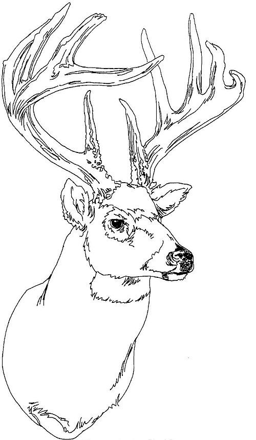 deer head coloring book pages | Adult Coloring Pages Deer Head Coloring Pages
