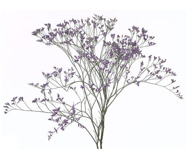 Limonium violet pour vos compositions printanières - France Fleurs