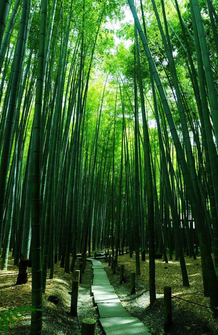 報国寺 Houkoku-ji Temple, Kamakura, Japan via αcafe | My Sony Club | ソニー #緑 #Green #Kamakura