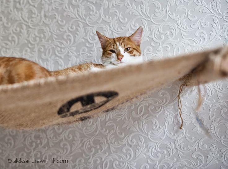 ..Salty Portraits..: London's Cat Cafe visit - Lady Dinah Cat Emporium