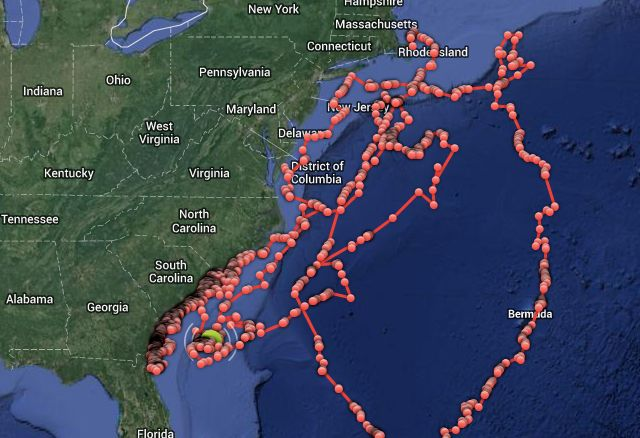Whoa. You can track sharks off the East Coast in realtime. An ambitious project means anyone can now track the movements of almost 50 sharks in real time. Some 47 sharks have been tagged with an array of sensors that allow scientists to accurately plot their position.
